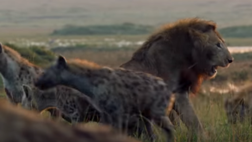 Lion Attacked By Pack Of Hyenas In This Week's 'Dynasties'