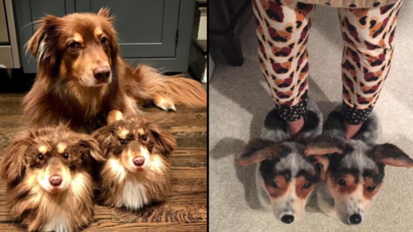 You Can Now Get A Pair Of Slippers That Look Exactly Like Your Dog