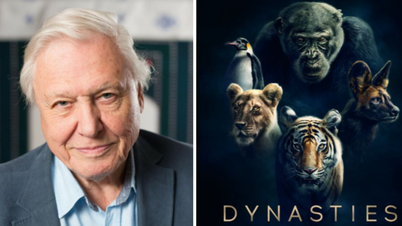 Sir David Attenborough's New Documentary Dynasties To Air In Autumn