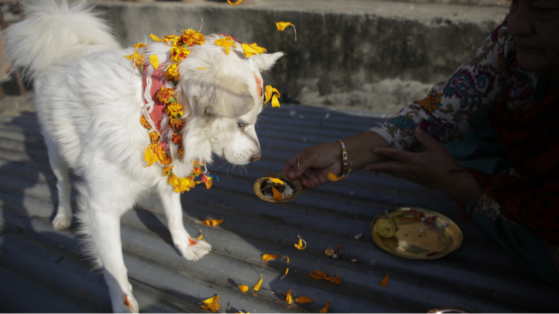 Nepal's Kukur Tihar Festival Is Dedicated Entirely To Dogs