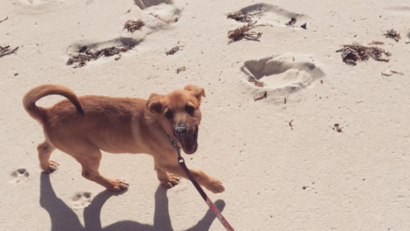 There's A Beautiful Island Filled With Dogs And I Need To Go