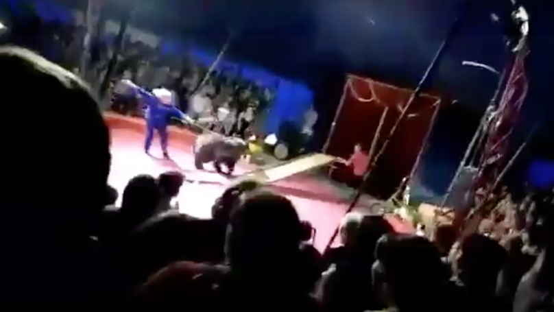 Russian Circus Bear Attacks Its Handlers After Being Beaten With Sticks