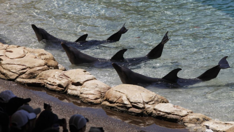 Petition Launched To Ban Sea World From Keeping Dolphins In Captivity