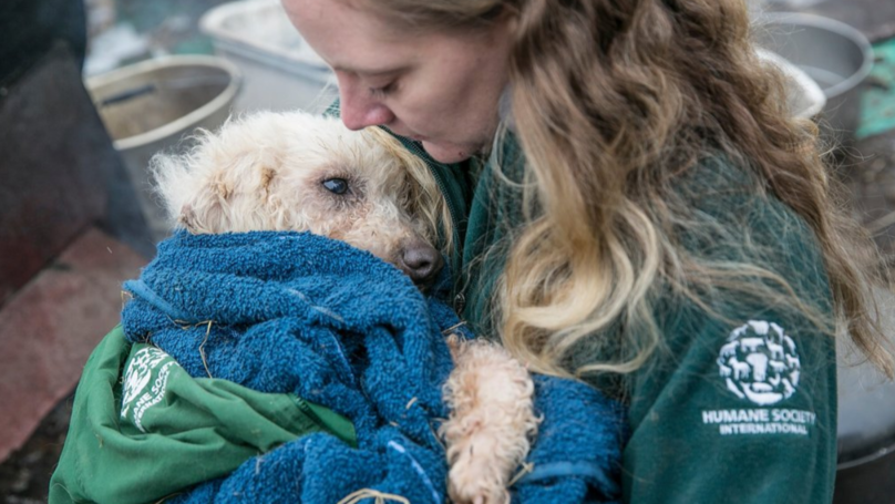 Hundreds Of Dogs Rescued Have Been From A Meat Farm In South Korea