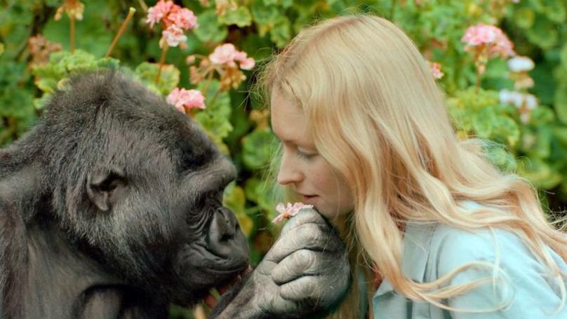 Koko The Famous Sign Language Gorilla Dead At 46