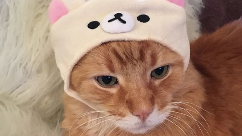 Urban Outfitters Is Selling Caps For Your Cat And It's Cuteness Overload