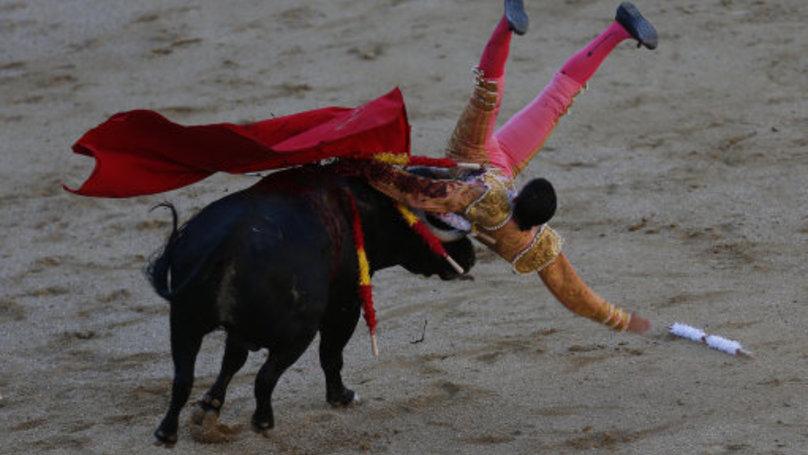 dr matador bonanza