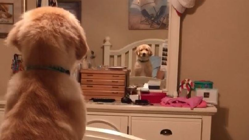WATCH: This Puppy Barking At His Own Reflection Will Make Your Day