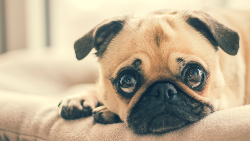There's A Scientific Reason We Want To 'Eat' Cute Puppies