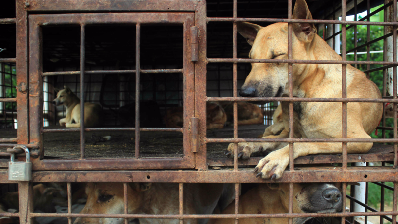Taiwan Becomes First Asian Country To Ban Dog And Cat Meat   LADbible