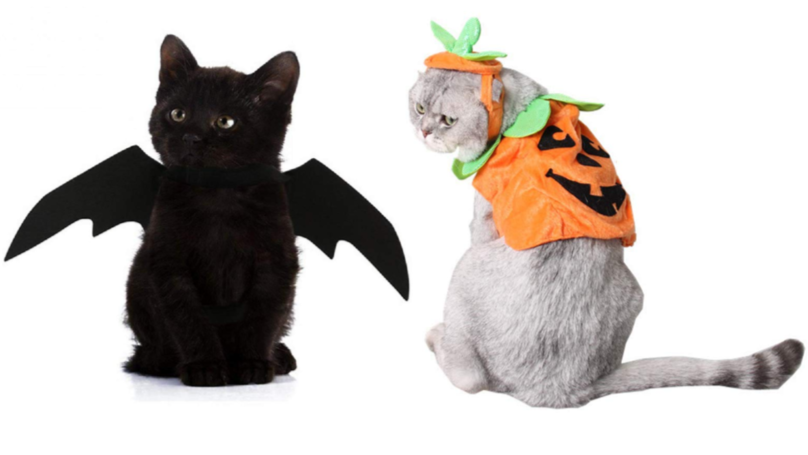 These Cats Have Already Won Halloween With Their Spooky Costumes