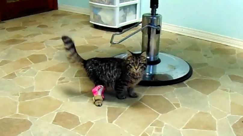 Wobbly Kitten Walks Straight For First Time Thanks To 3D-Printed Leg