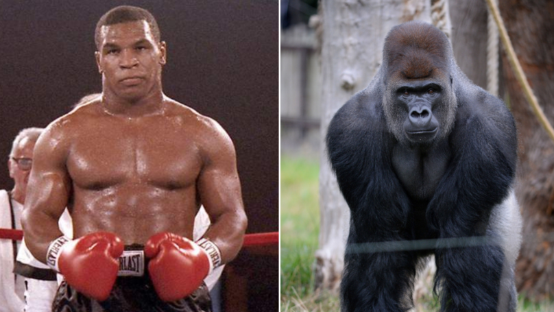 Mike Tyson Actually Tried To Fight A Silverback Gorilla For $10,000