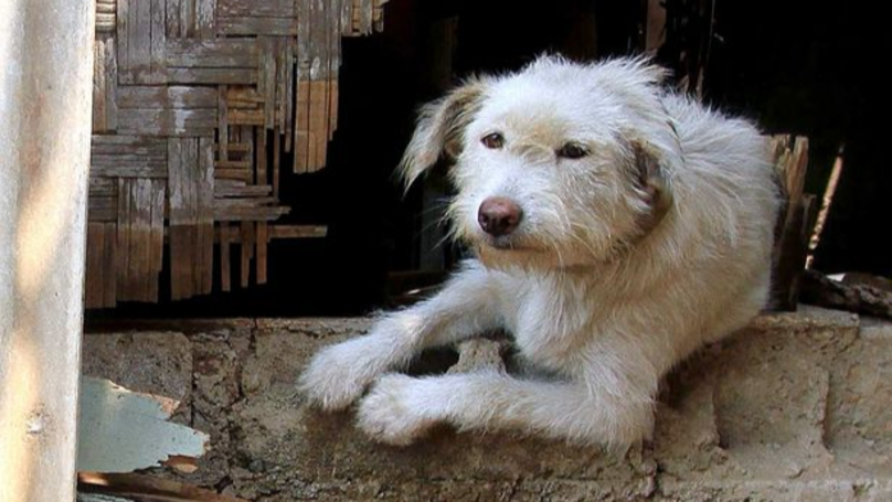 ​Photographer Exposes Brutal Side To Indonesian Dog Meat Industry