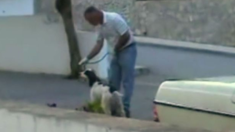 Footage Shows Sniffer Dogs 'Pick Up Scent Of Blood' In Madeleine McCann Holiday Apartment