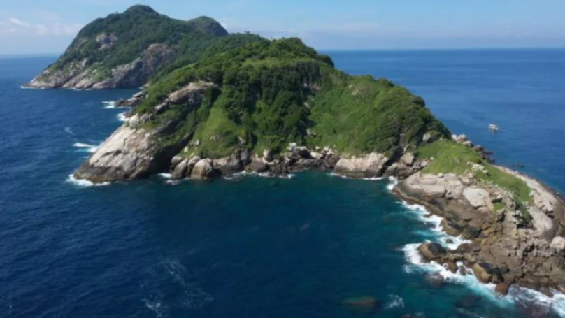 'Snake Island' Is Home To 4,000 Serpents With Flesh-Melting Venom