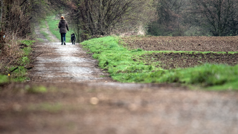 Dog Owners Warned About Killer Disease Which Could Be Picked Up From Mud