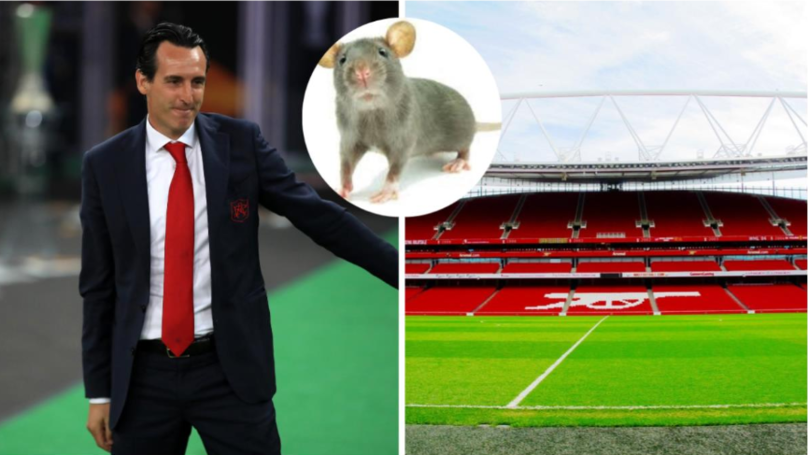 Arsenal Staff Sent For Pest Control Training To Deal With Mice Problem At Emirates Stadium