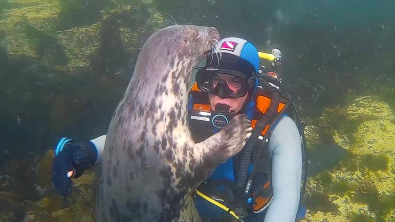 野生灰密封给海底潜水医生拥抱