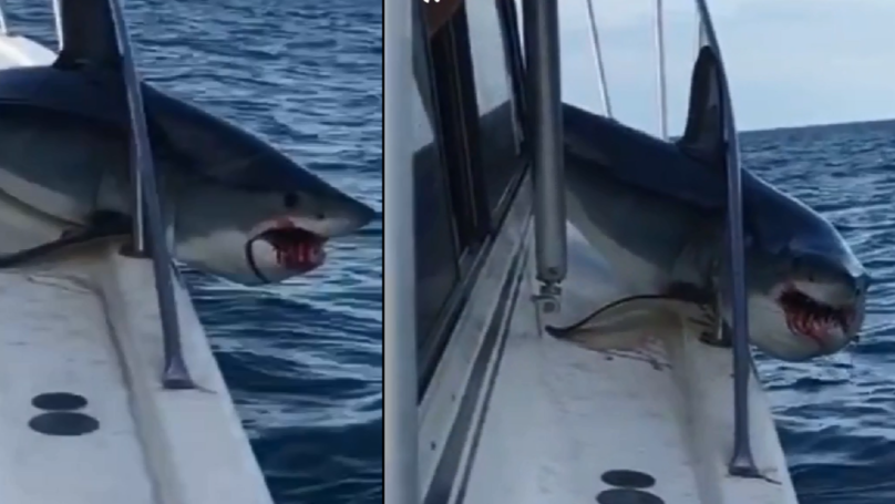 Mad Shark Jumps Onto Fishing Boat Causing Havoc