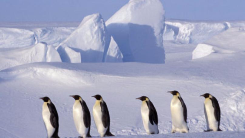 One-Trillion Tonne Iceberg Breaks Off Antarctic Ice Shelf, Prompting Global Warming Fears