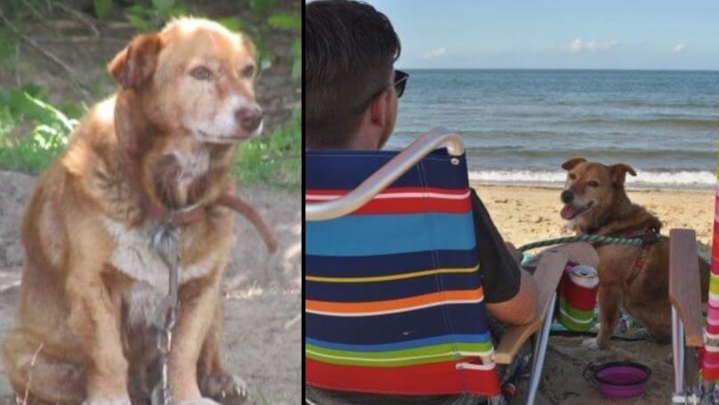 Dying Dog Who Spent Whole Life In Chains Ticks Off Bucket List In Final Days
