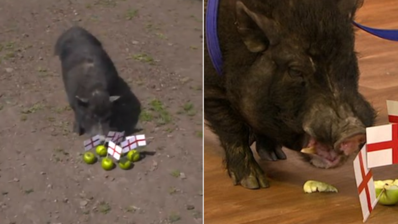 Fans Call For 'Marcus The Mystic Pig' To Be Turned Into Bacon After Predicting England Win
