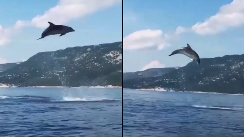 Wild Dolphins Give Tourists In Boat An Unbelievable Show