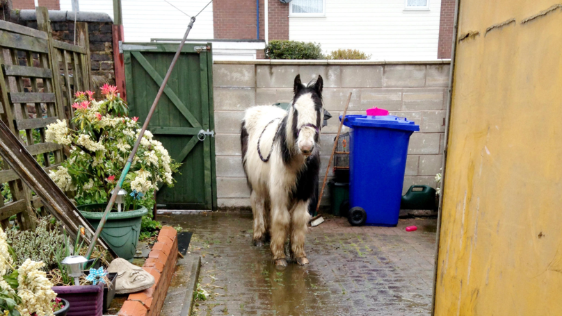 Shocked Grandmother Finds A Pony Dumped In Her Back Yard