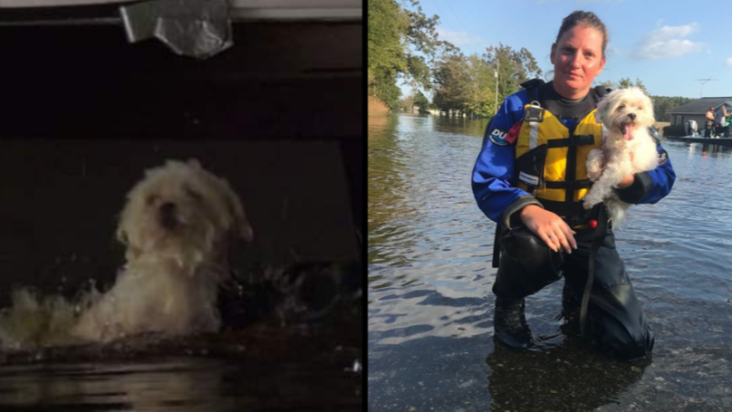 Amazing Moment Puppy Is Rescued From A Flooded Home