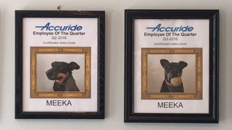 ​Man Who Works At Home Keeps Awarding His Dog 'Employee Of The Quarter'