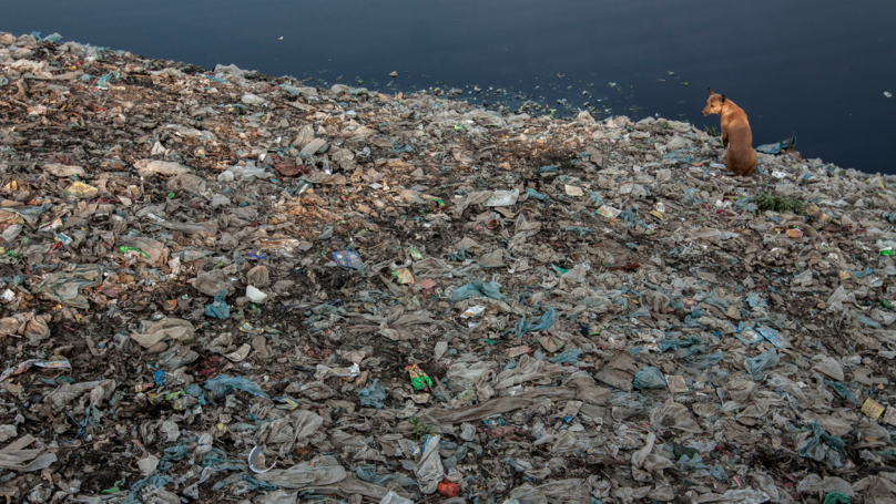 Plastic Eating Fungus Discovered In Pakistan