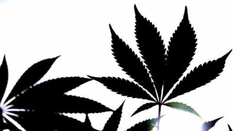 Police Take The Mickey With Note Left For Cannabis Growers
