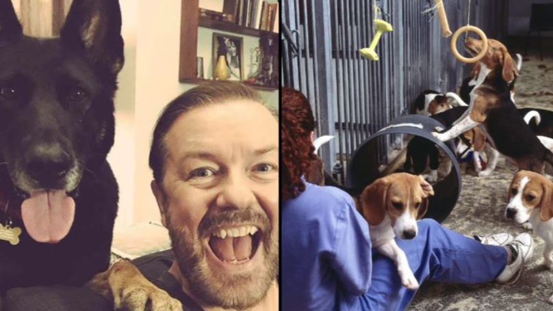 Ricky Gervais Calls For UK Government To Ban Experiments On Dogs