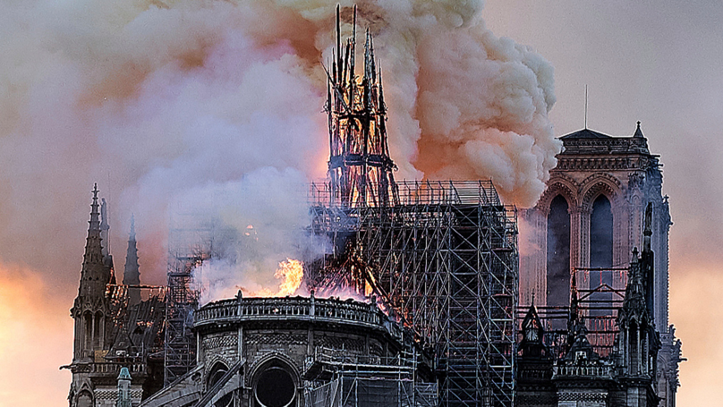 Notre Dame's 200,000 Roof Bees Said To Have Survived Fire