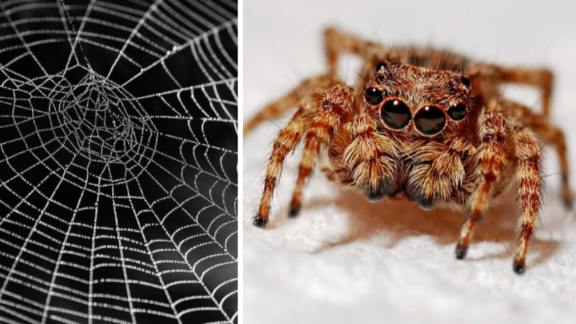 This Helpful Trick Will Banish Spiders From Inside Your Home
