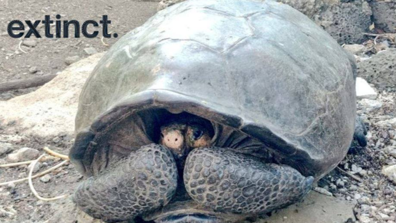 Giant Tortoise Believed To Be Extinct Found On The Galapagos Islands