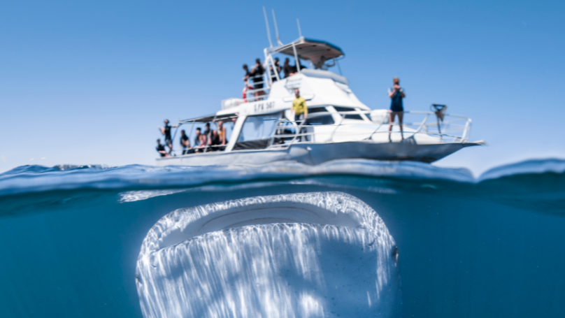 ​Huge Whale Shark Photographed Dwarfing Boat Full Of Unsuspecting Tourists