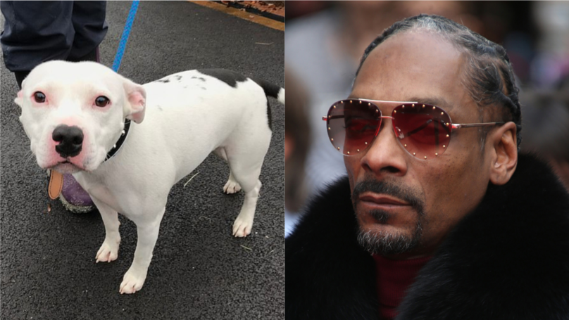 ​Snoop Dogg Offers Home To Abandoned Staffie Dog Called Snoop