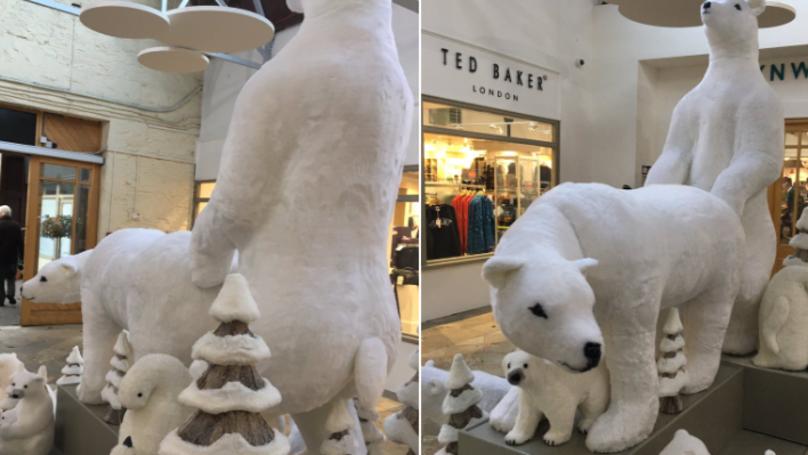 通过交配购物者离开觉得好笑,却不安的北极熊