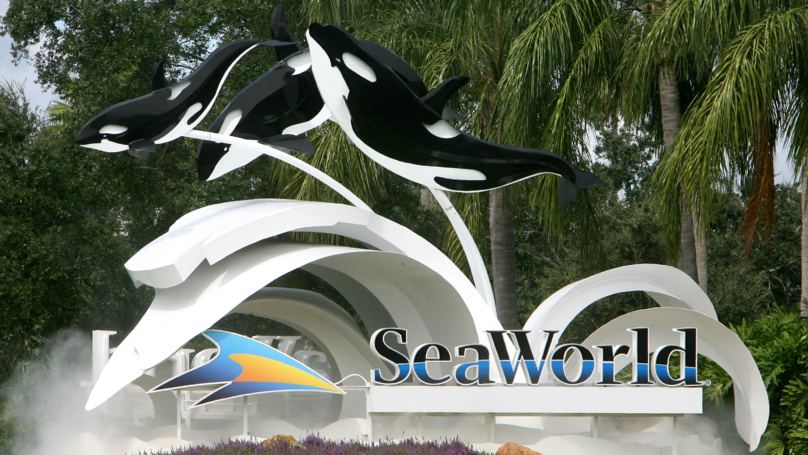 One Of SeaWorld's Killer Whales Has Died In Captivity After A 'Brief Illness'