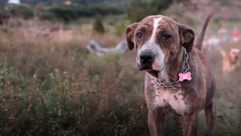 Netflix To Release A Special Documentary All About Dogs