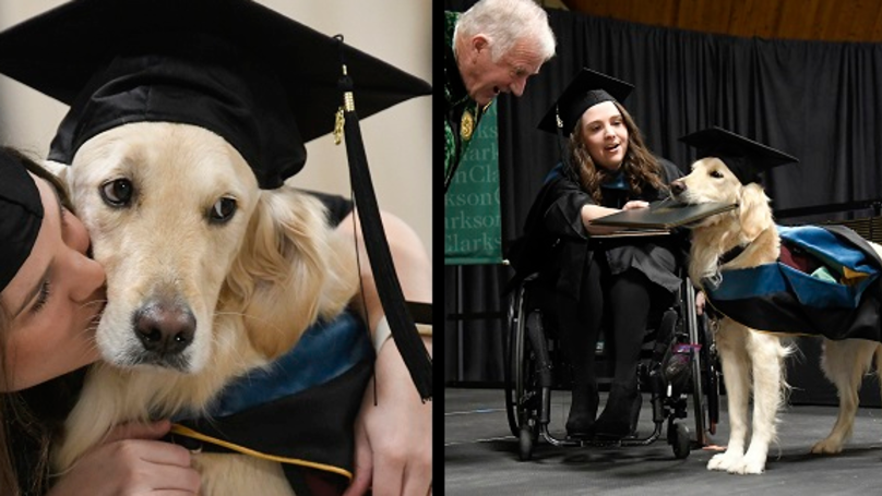 Service Dog Receives Honorary Diploma Alongside His Owner At Her Graduation