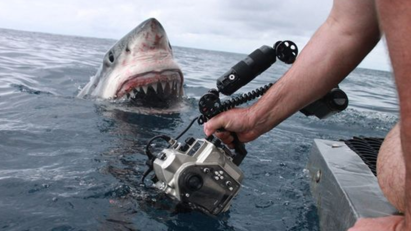 Man Captures Incredible Photos Of Great White Shark Just Inches From Its Mouth