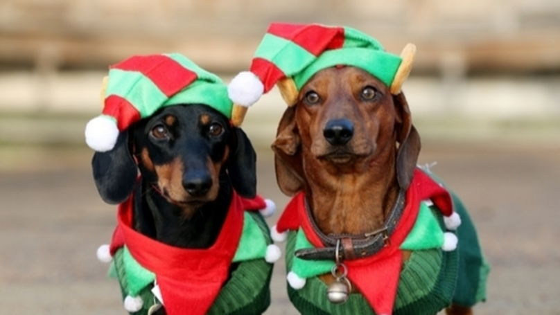​Over 500 Dogs In Christmas Outfits Gathered In Hyde Park Over The Weekend