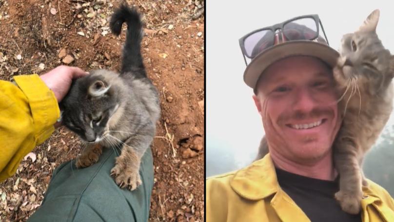 猫拒绝放弃从加州火灾消防员救出了她