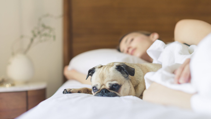Study Suggests Women Sleep Better Next To Dogs Than Men