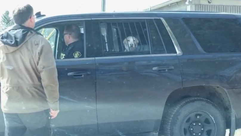 A Dog Who Was Detained By Police After Chasing A Deer Becomes Internet Sensation