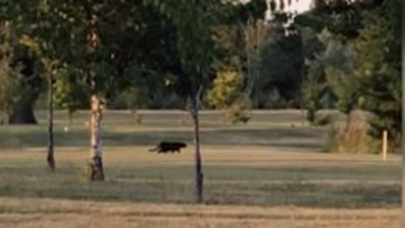 Woman Claims To Have Filmed Panther-Like Creature On Golf Course
