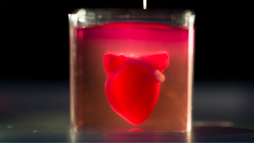 Scientists Print First 3D Heart Using Human Tissue & It's Amazing